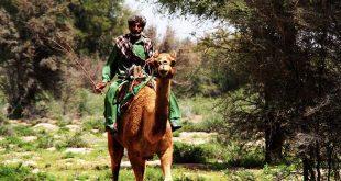 مرد شتر سوار تصاویری از پدران جنوب شرق ایران