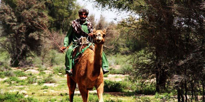 Photo of تصاویری از پدران جنوب شرق ایران رودبارجنوب، بلوچستان، جازموریان