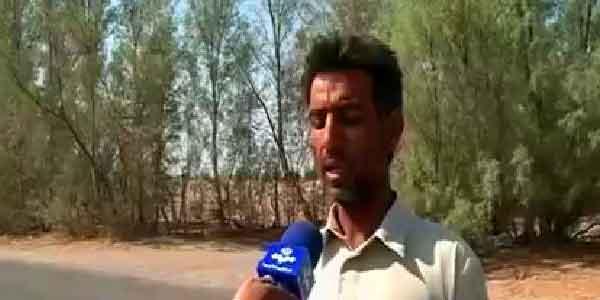 قاچاق چوب گزارش اخبار 30 و 20 از قاچاق چوب از زهکلوت